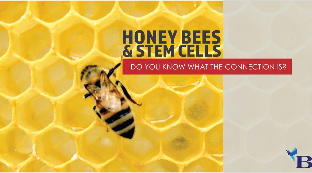 Honey Bees and Stem Cells