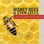 honey bees stem cells